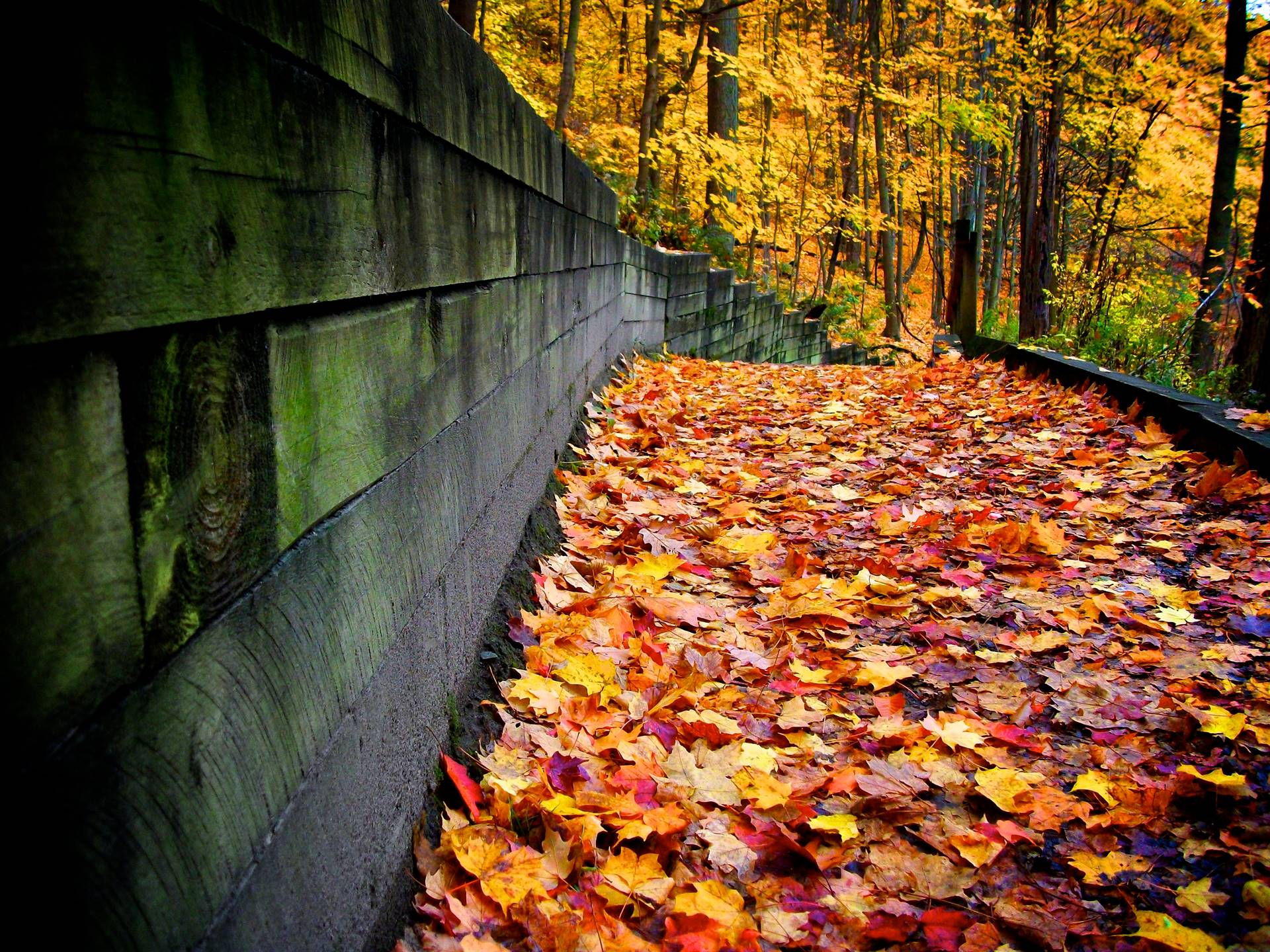 Fall-Leaves_Digital-Photography