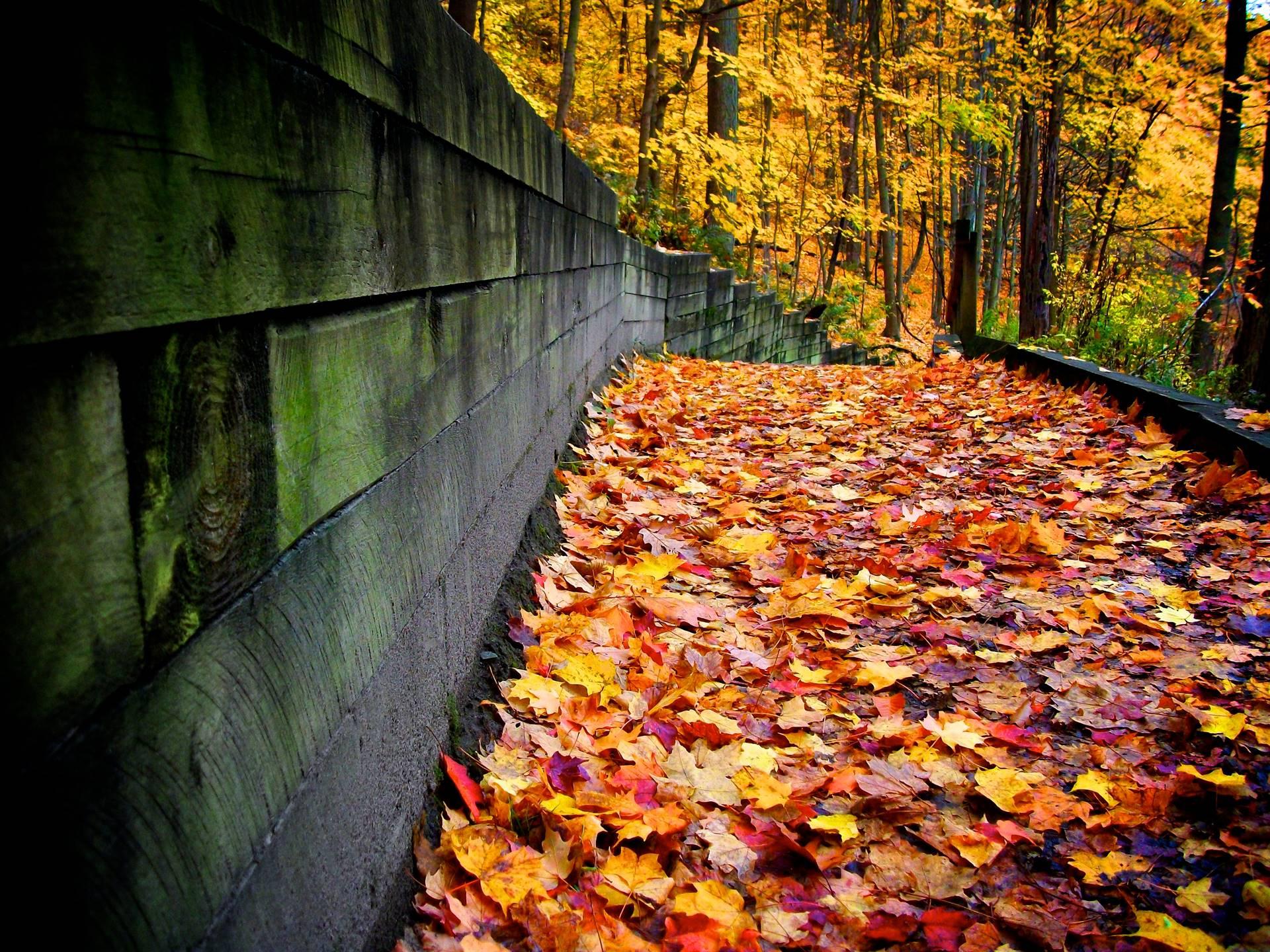 Fall-Leaves_Digital-Photography