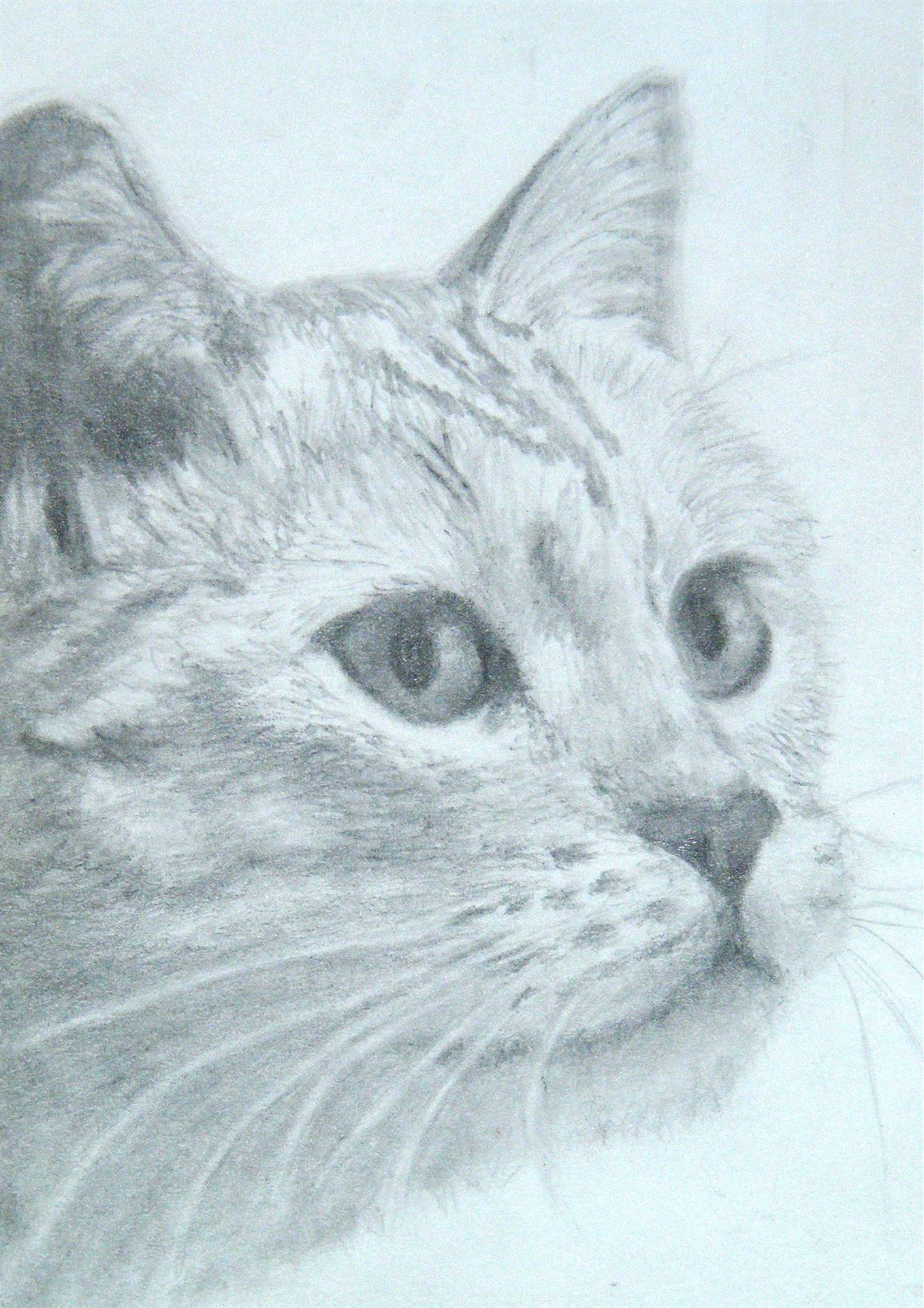 Pencil-drawing-of-cat